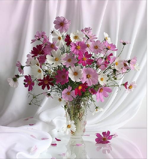 fleurs trans cosnos936417modarticle136878720