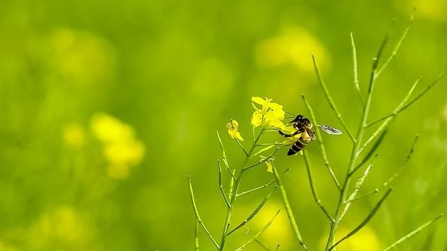 Le mystère de la disparition des abeilles 150505102617620096