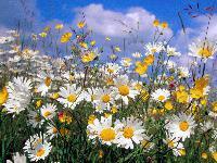 Fleurs  Mini_150521054805738979