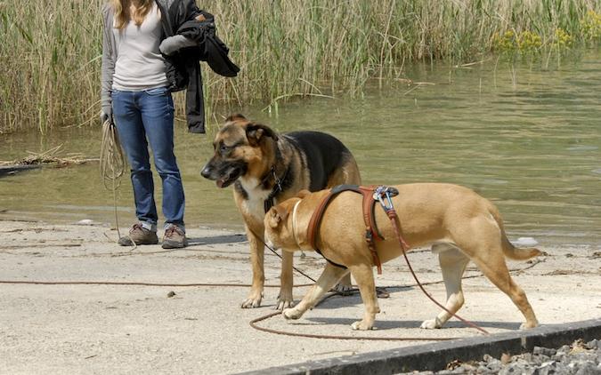 Balade au Lac du Der (51-52) - weekend du 23-24 mai 2015 - Page 5 150524050635999919