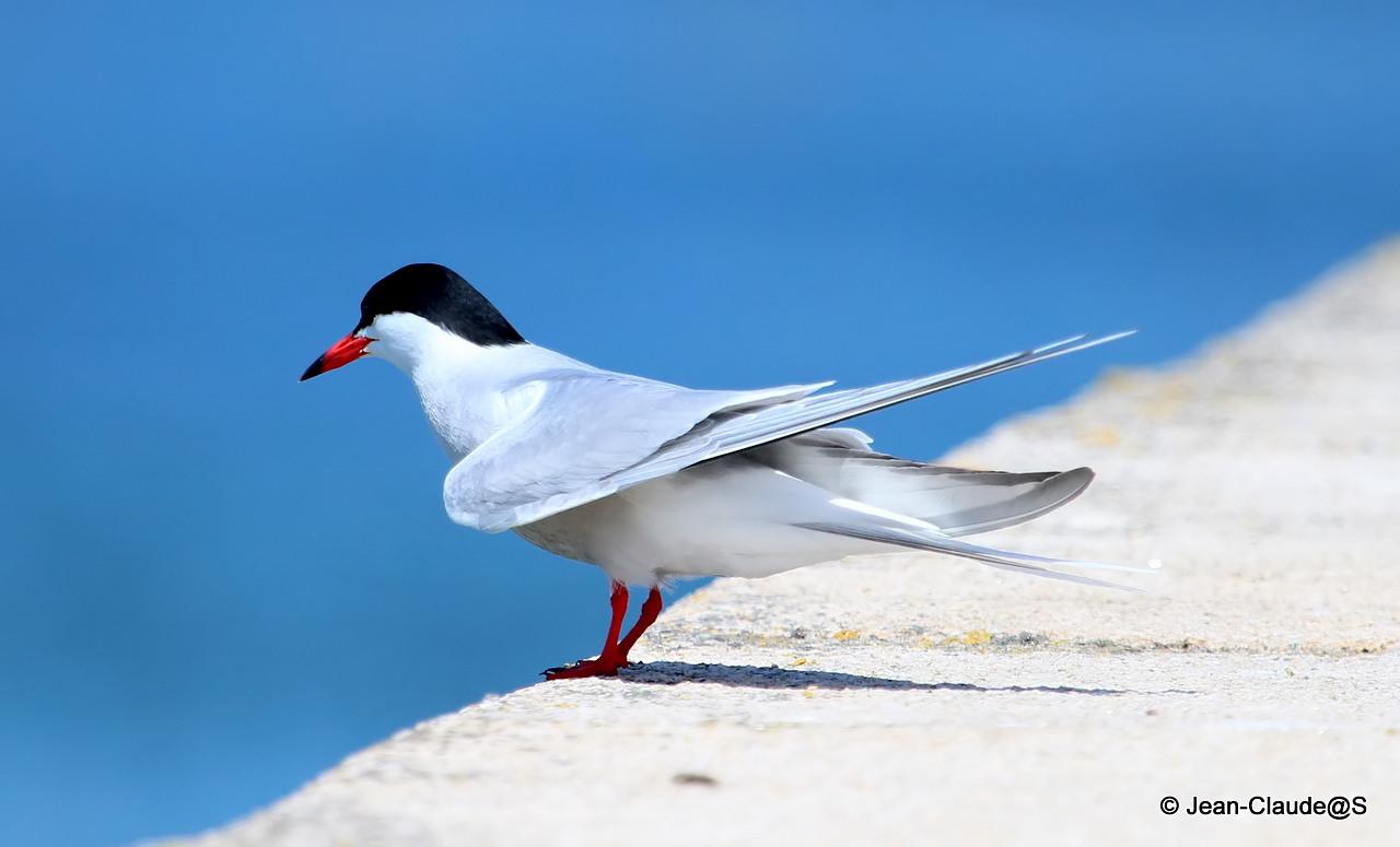 Les oiseaux de la Ria d'Etel 150525051904659615