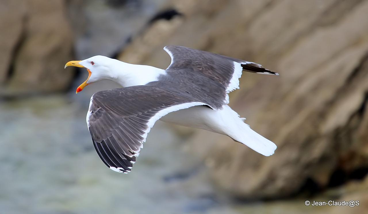 Les oiseaux de la Ria d'Etel 150527104517498075