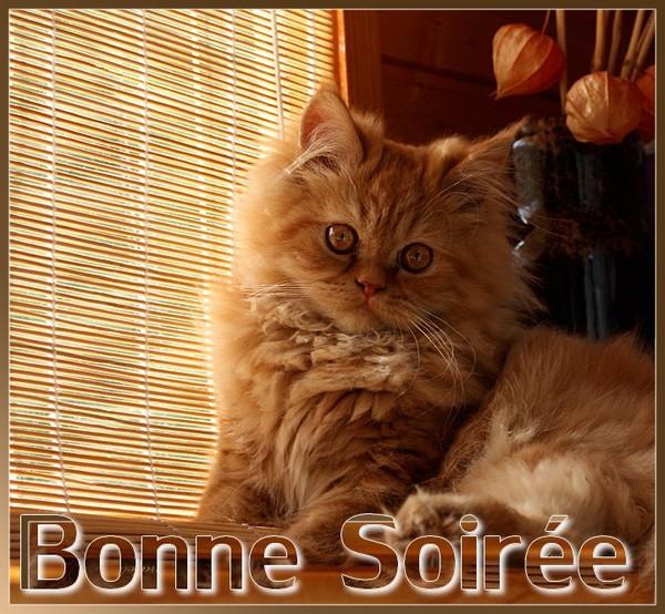 BONNE SOIRÉE DE VENDREDI 150529073131389665