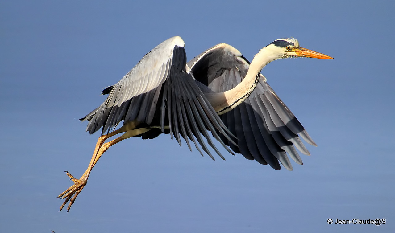 Les oiseaux de la Ria d'Etel - Page 2 150530102650779035