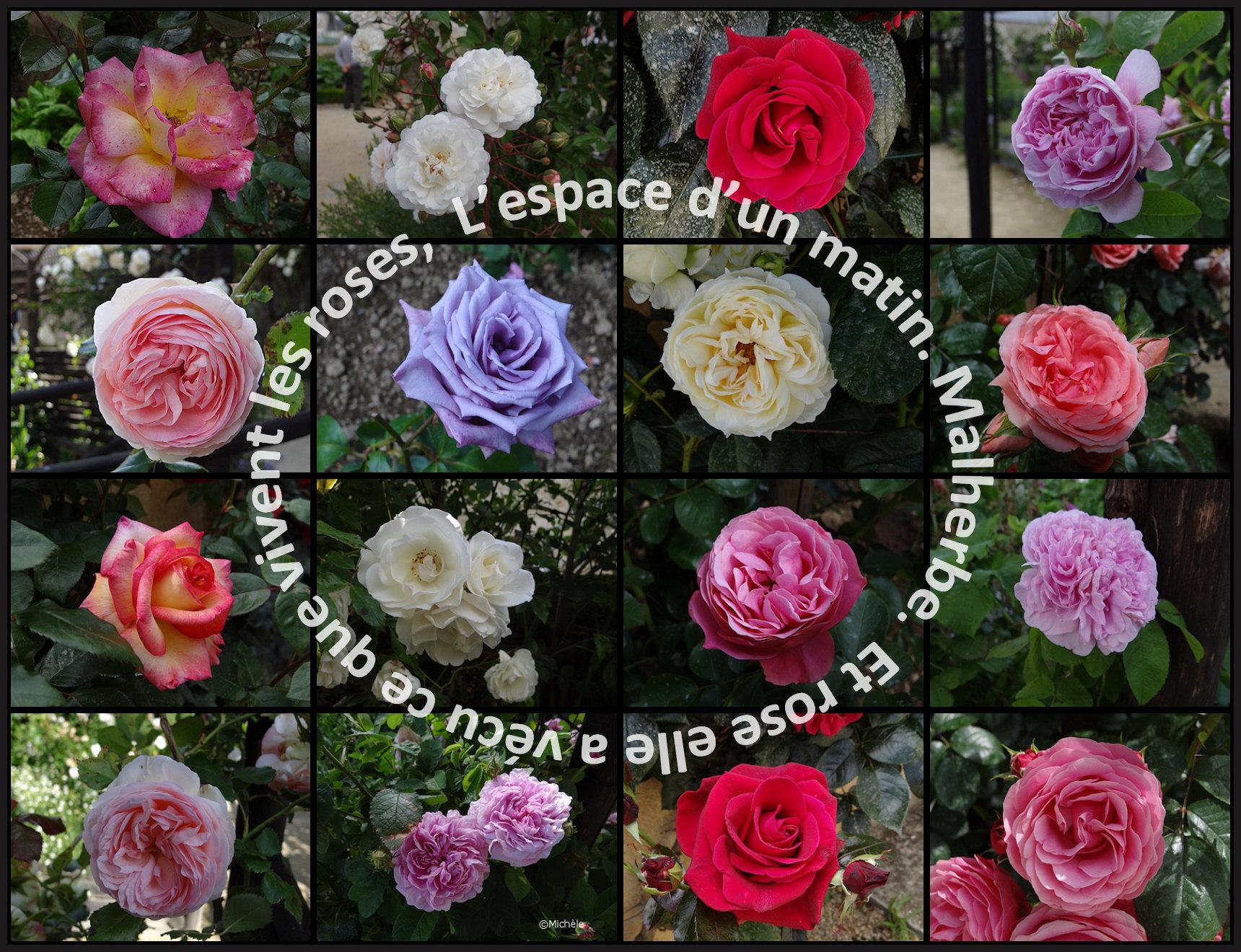 Montage roses Quimper