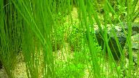 Plantes qui pourrissent Mini_150620122057907573