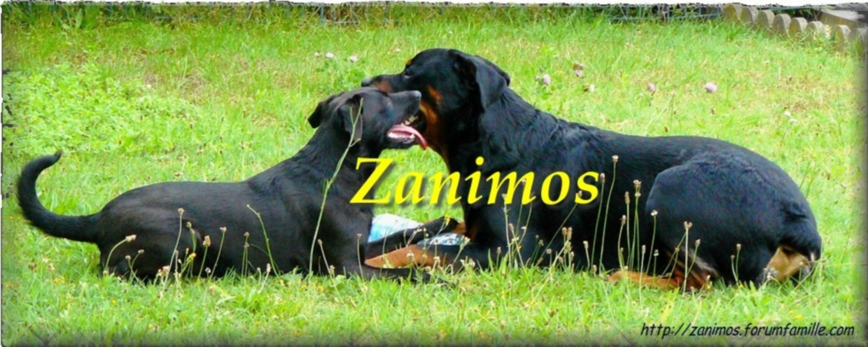 Forum dédié aux amoureux des Zanimos
