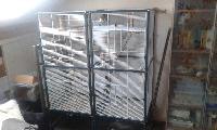 Perruche Calopsitte lutino (EAM) Mini_150629102346500776