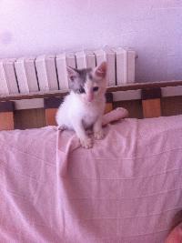 Chaton 1 mois, Var Mini_150705061119113439