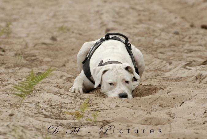 Rencontre canine du forum en région bordelaise (33) - Page 3 150714111636572513