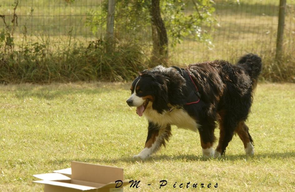 Animalin Camp d'été Discrimination d'Odeurs et Activités 2015 150725105814397655