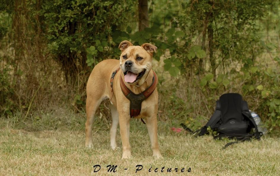 Animalin Camp d'été Discrimination d'Odeurs et Activités 2015 150725111203484530
