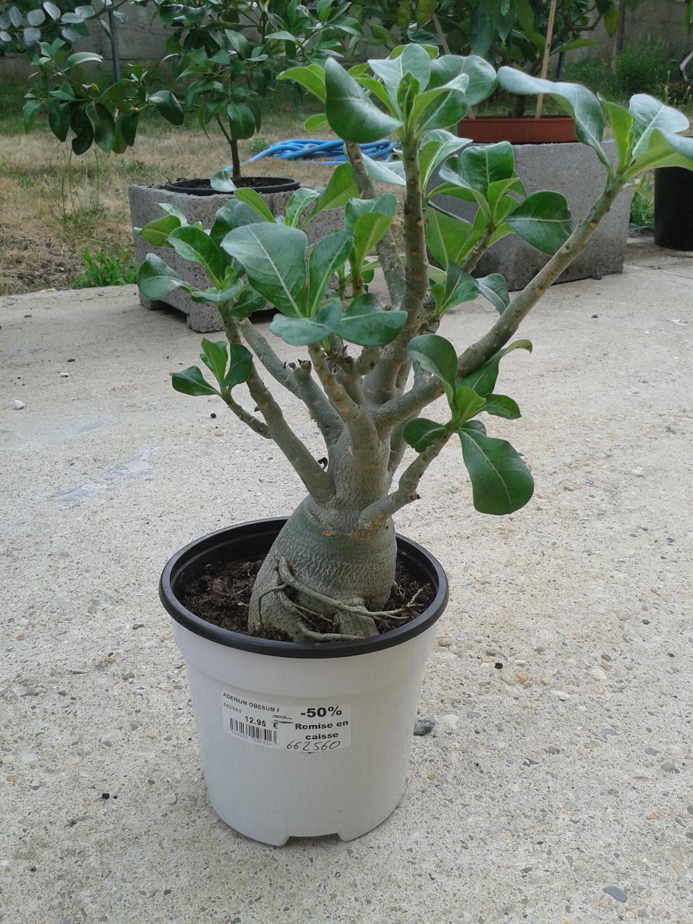 Forum consulter le sujet achat de plantes for Achat plante sur internet