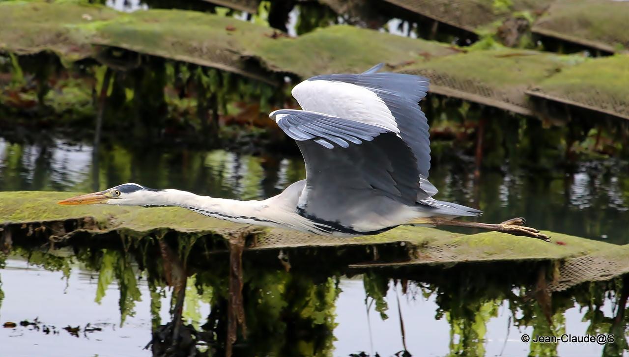 Les oiseaux de la Ria d'Etel - Page 2 150728040812254554