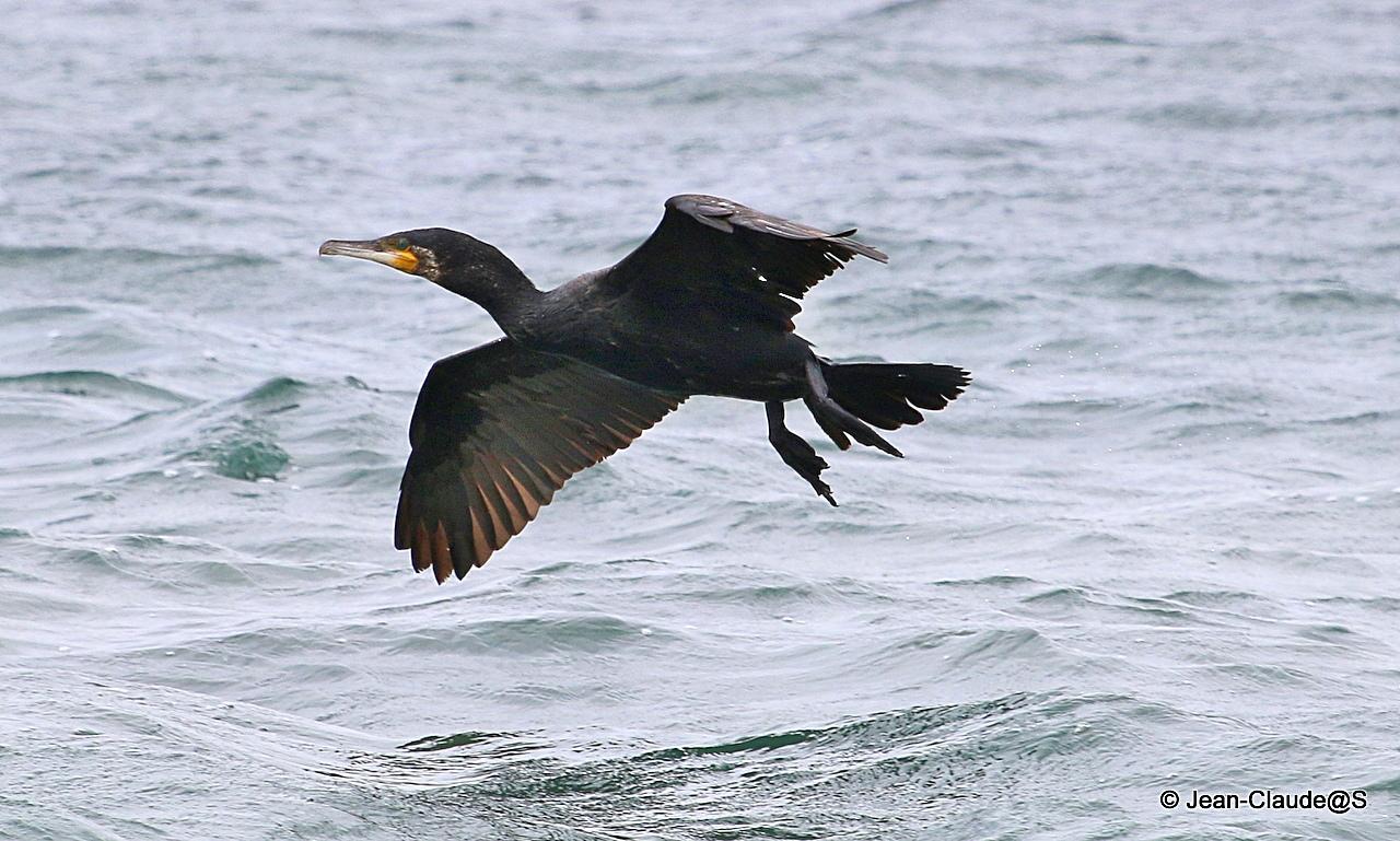 Les oiseaux de la Ria d'Etel - Page 2 150728083702157971