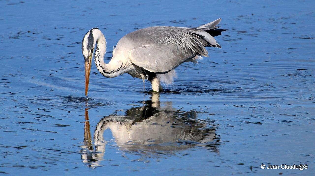 Les oiseaux de la Ria d'Etel - Page 2 150729120826836498