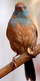 Oiseaux - Page 5 Mini_150805054830502113