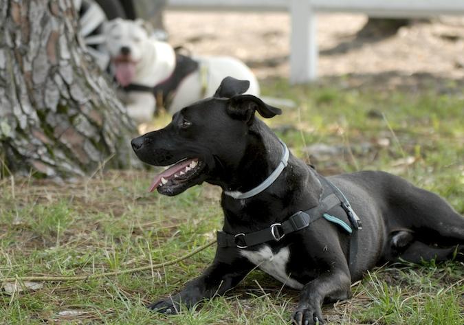 Rencontre canine du forum en région bordelaise (33) - Page 5 150812021856708327