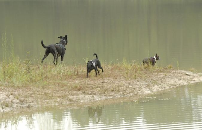 Rencontre canine du forum en région bordelaise (33) - Page 6 150813065744164892