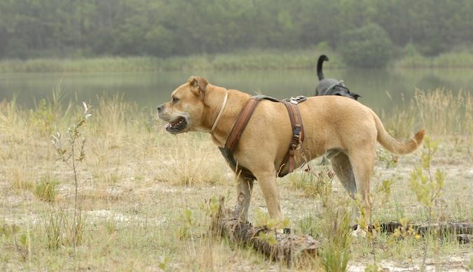 Rencontre canine du forum en région bordelaise (33) - Page 6 150813065745945051