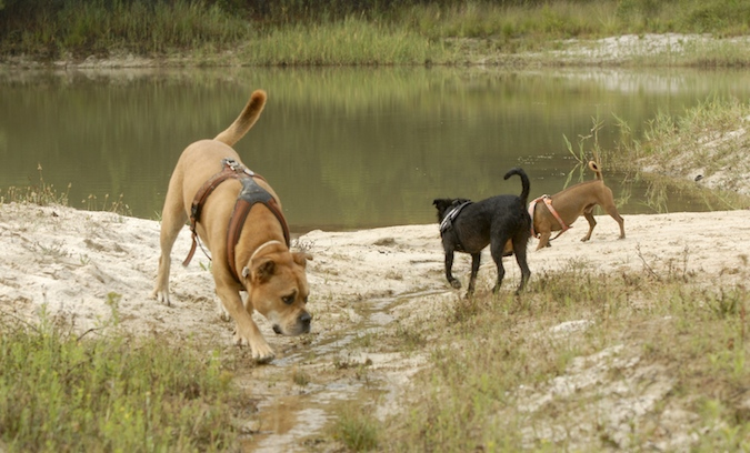 Rencontre canine du forum en région bordelaise (33) - Page 6 150813065747538445
