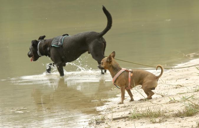 Rencontre canine du forum en région bordelaise (33) - Page 6 150813070015326925