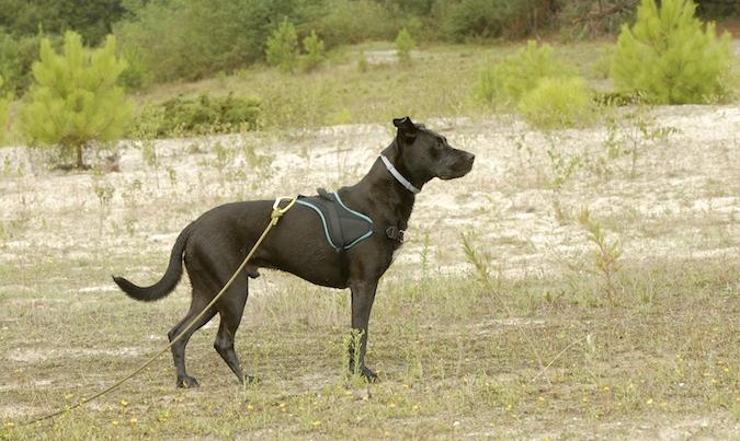 Rencontre canine du forum en région bordelaise (33) - Page 6 150813070017755730
