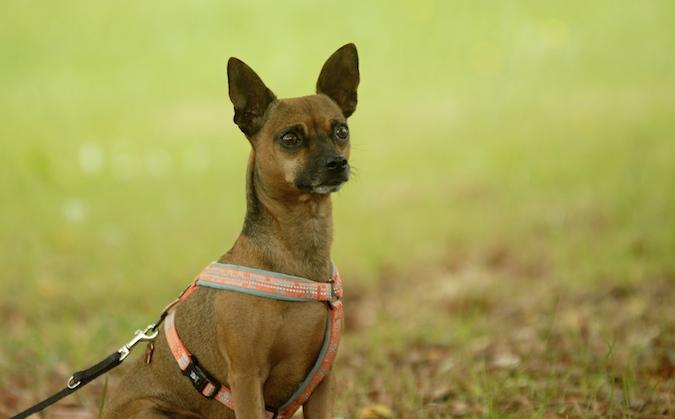 Rencontre canine du forum en région bordelaise (33) - Page 6 150813070635895017