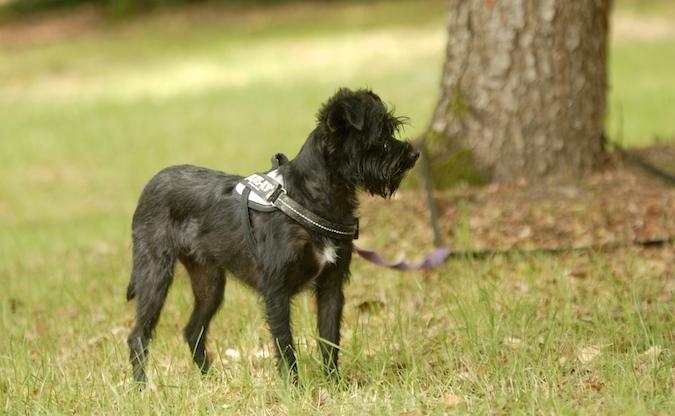 Rencontre canine du forum en région bordelaise (33) - Page 6 150813070638324269