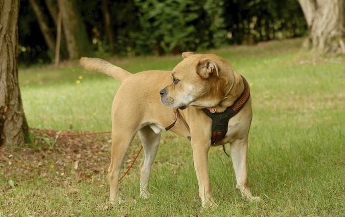 Rencontre canine du forum en région bordelaise (33) - Page 6 150813070638553339
