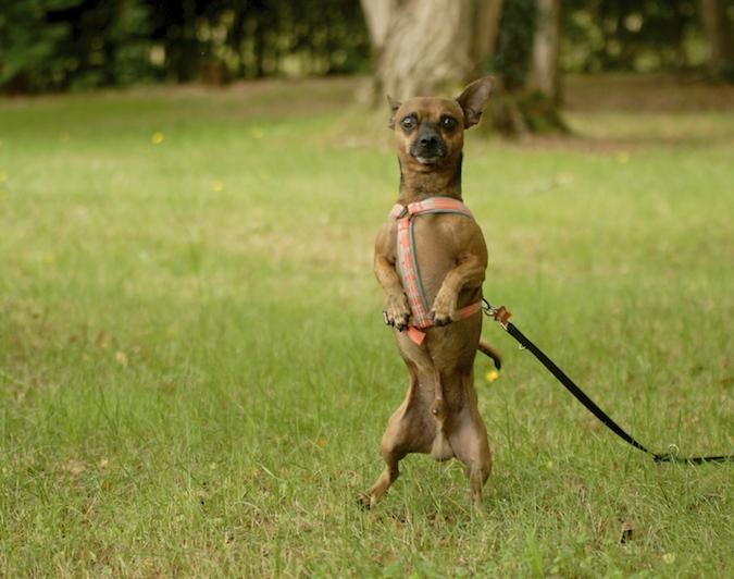 Rencontre canine du forum en région bordelaise (33) - Page 6 150813072224159825