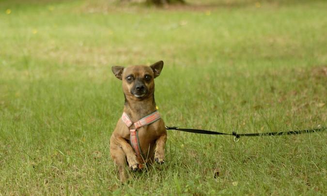Rencontre canine du forum en région bordelaise (33) - Page 6 150813072225176320
