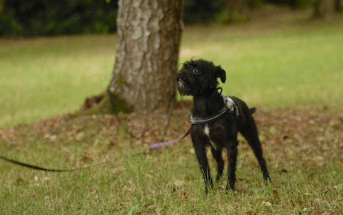 Rencontre canine du forum en région bordelaise (33) - Page 6 150813072225388362