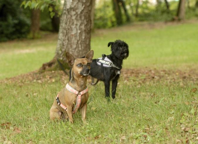 Rencontre canine du forum en région bordelaise (33) - Page 6 1508130803201111