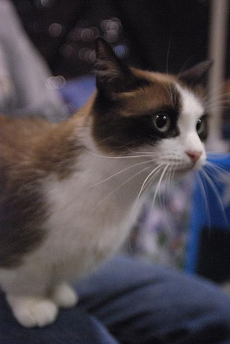 Koty #3 9