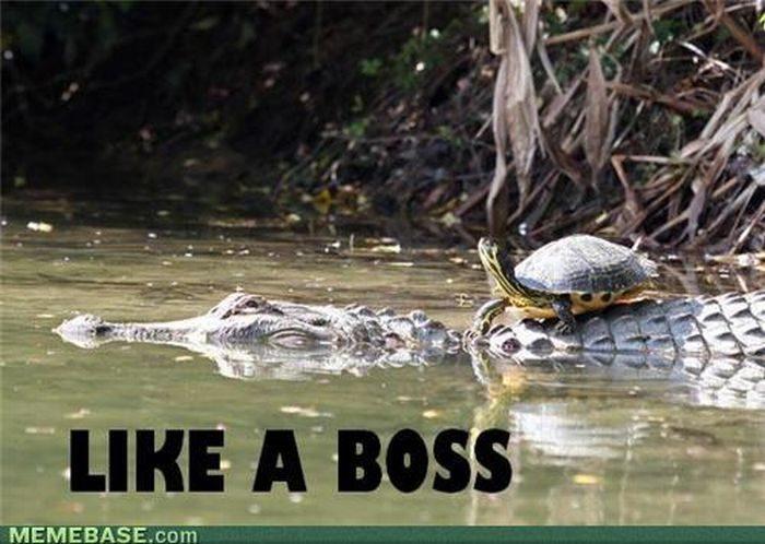 Jak boss #2 10