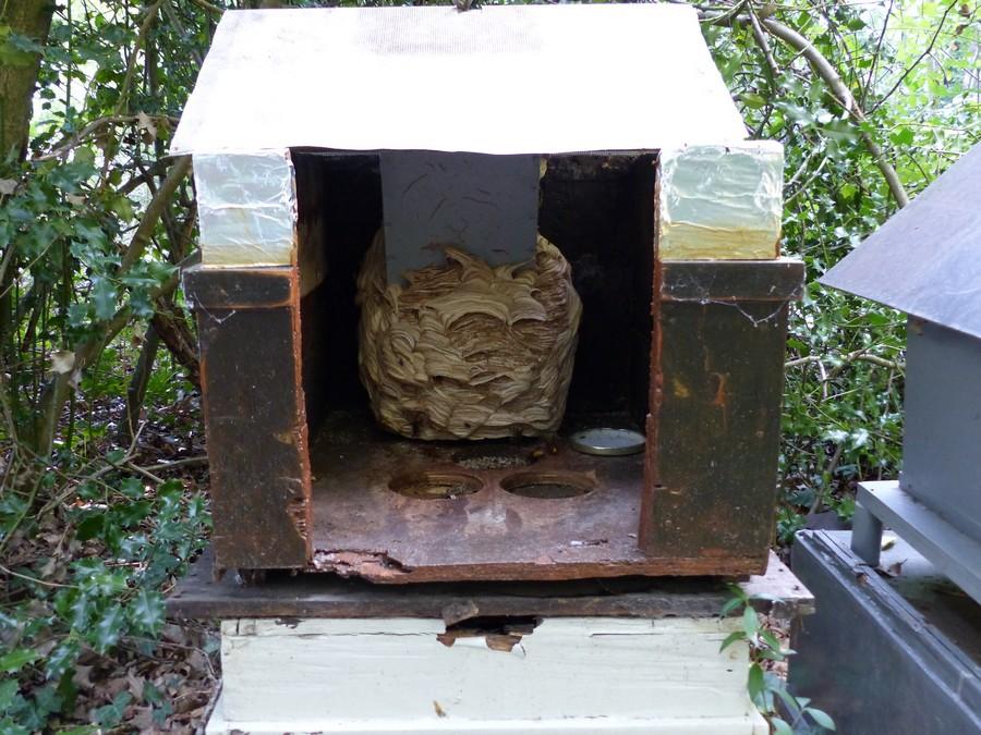 nid construit dans une boite a oiseaux 150910101021122455