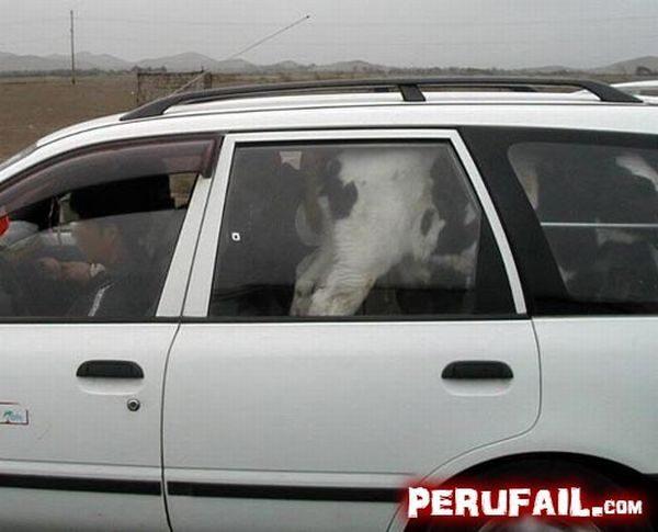 Tylko w Peru 33