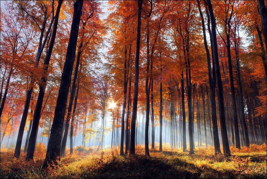 Barwy jesieni #2 33