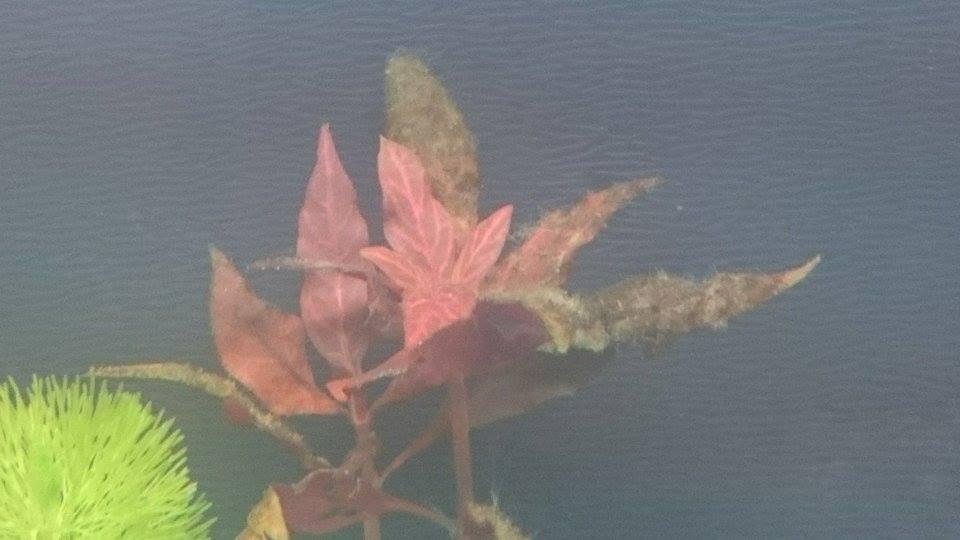 mousse verte sur les plantes rouge