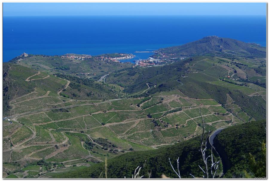 Vue sur les Vignobles de  Banyuls et de la tour  Madeloc 150929110024434781