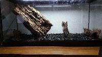 Aquarium de bureau 80L Mini_151002021932157603