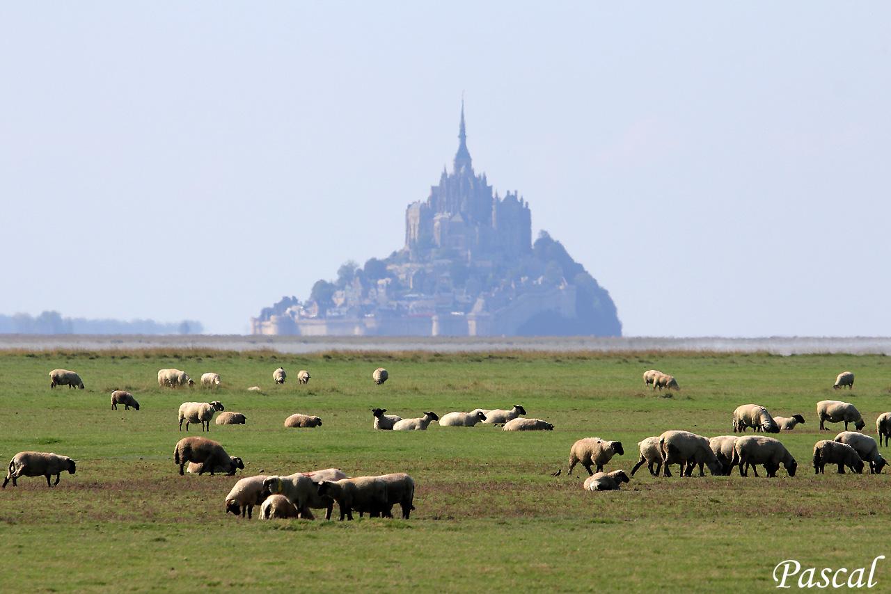 Les herbus de la baie du Mont Saint Michel 151007071145706956