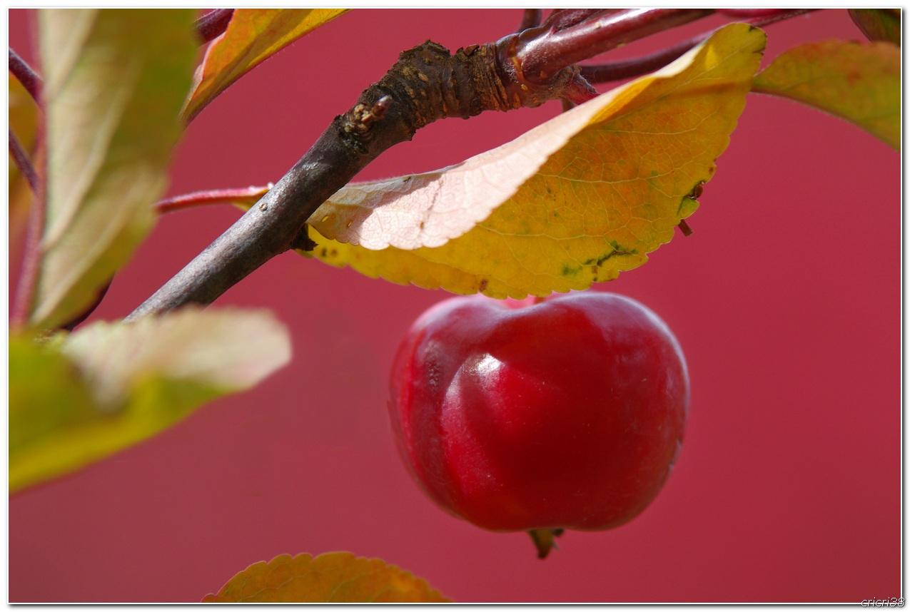 Couleurs d'automnes  151025022610452069