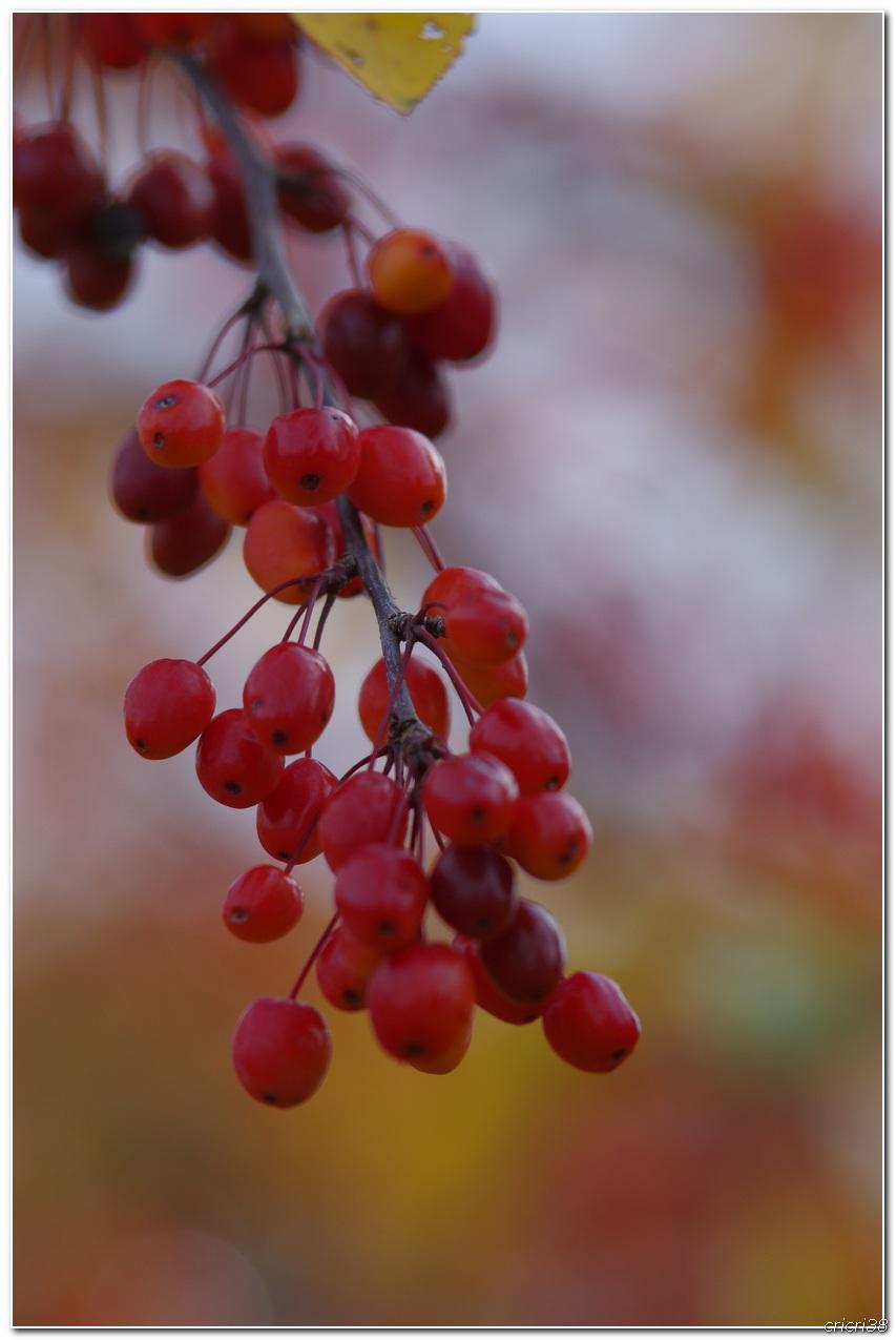 Couleurs d'automnes  151025022613149787