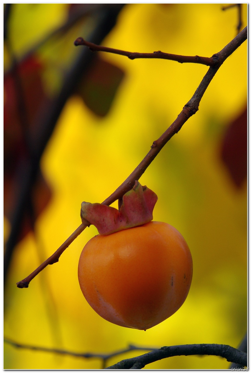 Couleurs d'automnes  151025022616768392