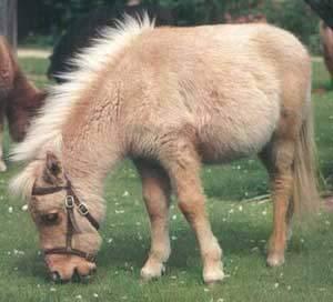 poney alrik