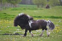 poney eben