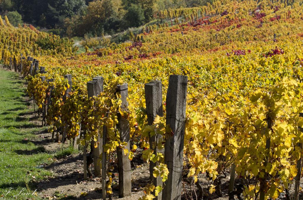 Couleurs d'automne dans le vignoble ardéchois 151114074210451359