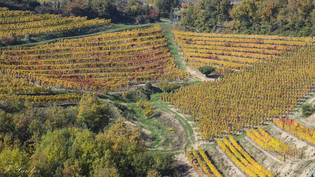 Couleurs d'automne dans le vignoble ardéchois 151114074228327176